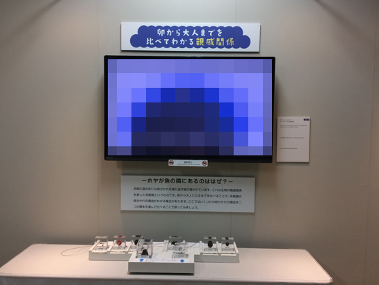 exhibition24.jpg